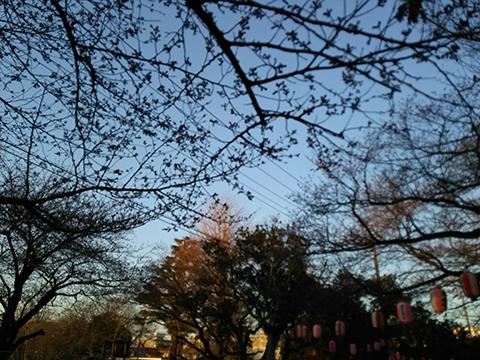 2015-03-26-sakura.jpg